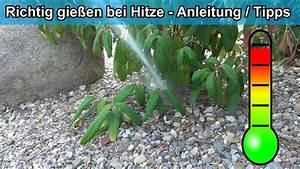 Alpenveilchen Gießen Wie Oft : den garten pflanzen im sommer bei hitze richtig gie en ~ A.2002-acura-tl-radio.info Haus und Dekorationen