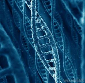 The gallery for --> Real Human Dna Strand