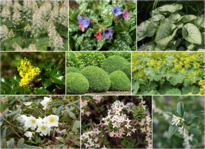 plants suitable for shade ready made garden border designs kits for year round colour