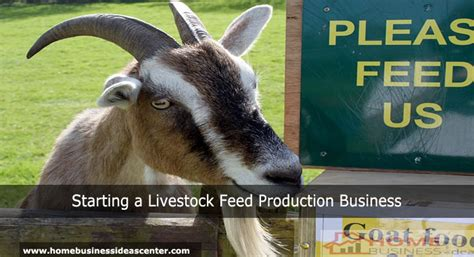 Starting A Livestock Feed Production Business  Small. How To Become A Firefighter In Ohio. Corporate Leadership Training Programs. Rehab Centers Of Charleston Cube Gas Mileage. Seo Website Analysis Software. Graphic Design Trade Schools. Roosevelt Vision Clinic Bandwidth Usage Meter. Switching From Breastmilk To Formula. Court Reporting Software Avg Mobile Security