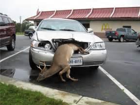 Deer Stands Walmart by Funny Deer Wallpaper Desktop Funny Animal