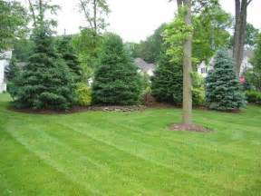 Privacy Landscaping with Trees