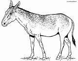 Mule Coloring Pages Donkey Realistic Getcoloringpages Deer sketch template