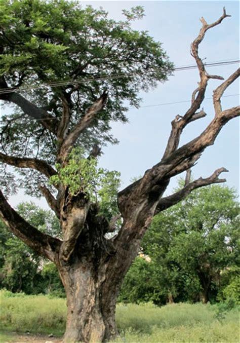 tree problems diagnosis disease diagnosis pest management rockford tree service