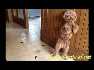 dog pooped on floor and got standing punishment With i pooped on the floor