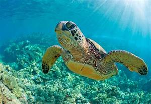 complex cocktail of chemicals found in coastal turtles