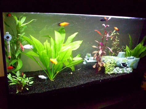 combien de poisson dans un aquarium combien de temps un poisson peut il rester dans une pondeuse