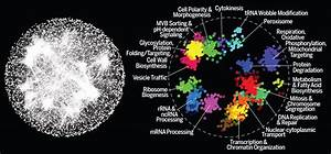 A Global Genetic Interaction Network Maps A Wiring Diagram Of Cellular Function