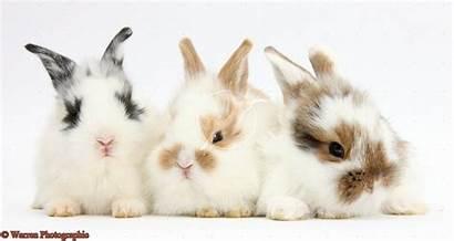 Bunny Wallpapers Bunnies Rabbits Google Rabbit Animals