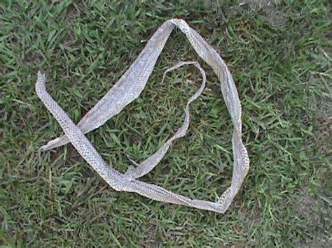 brown snake skin shedding snake skin eastern brown or python