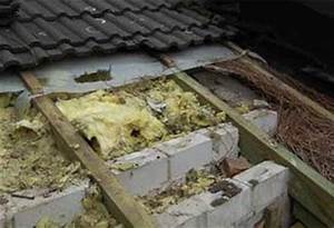 Wespen Im Haus : haben sie wirklich einen marder auf dem dachboden ~ Lizthompson.info Haus und Dekorationen