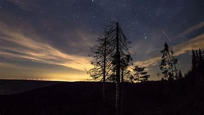 Sky Night Starry Trees Stars 4k Background