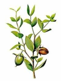 Маска для лица из авокадо против морщин