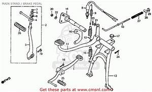 tail light but no brake light page 2 honda trail With this is with the brake light switch unplugged and looking into the