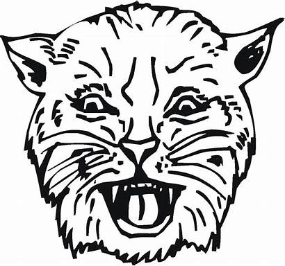Bobcat Coloring Pages Snarl