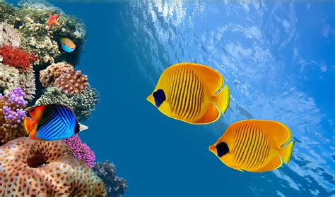 3d Animal Wallpaper 3d Fish Wallpaper - fish underwater world animals wallpaper 6039x3578