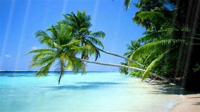 Beach Moving Animated Screensavers Summer Clipart Clip