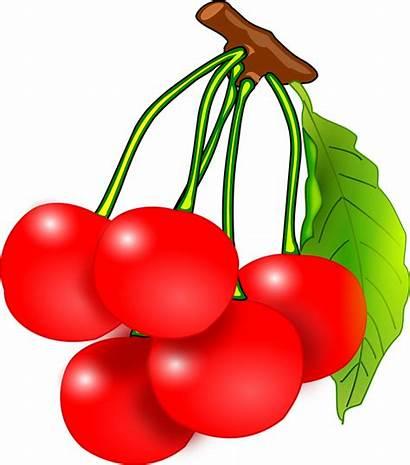 Cherry Cherries Clipart Clip Fruit Fruits Cheries
