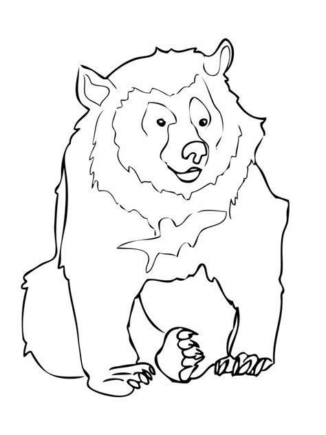 printable bear coloring pages  kids
