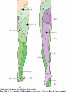 Unit 32 - Leg and Dorsum of Foot - StudyBlue