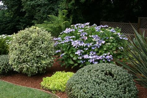 Front Yard Curb Appeal  Landscaping Network