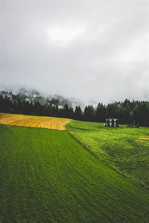 stock photo  forest haze landscape