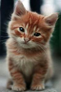 Extremely Cute ... Cute Cats