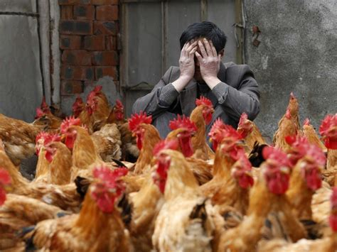 agric minister warns poultry farmers on looming bird flu