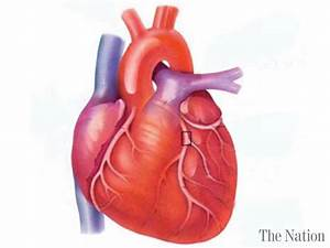 Heart Centre to arrange a walk, free medical camp