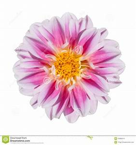 Fleur Rose Et Blanche : la fleur rose et jaune fleuriste bulldo ~ Dallasstarsshop.com Idées de Décoration