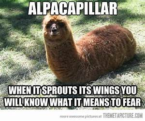 Funny Alpaca Jokes | www.imgkid.com - The Image Kid Has It!
