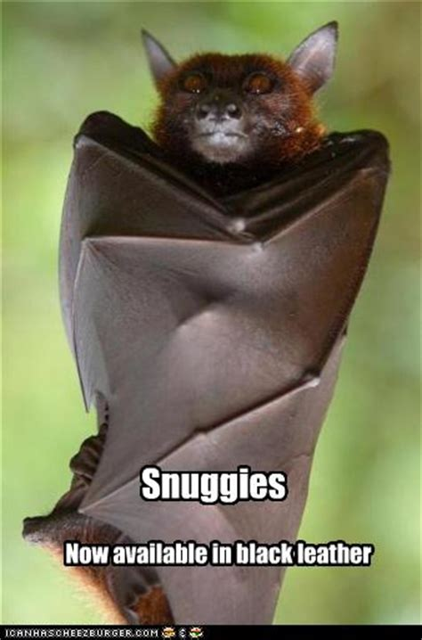 Bat Meme - funny quotes about bats quotesgram