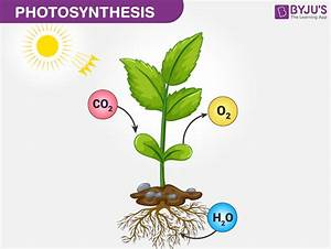 Photosynthesis  Definition  Process  Stages  U0026 Significance