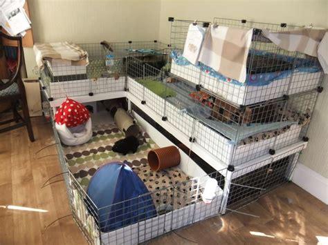 unique home  guinea pig cages member gallery cc