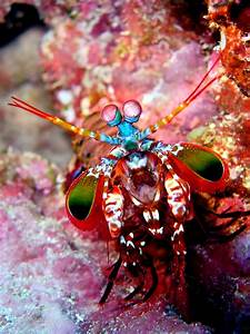 Top 10 most Beautiful and Colorful Fish - Page 2 of 2