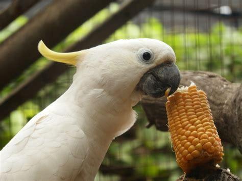 taman burung tmii pilihan wisata edukasi danang