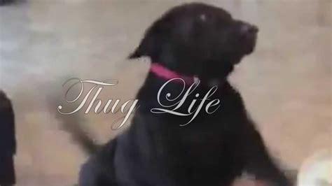 Thug Life Dogg Youtube
