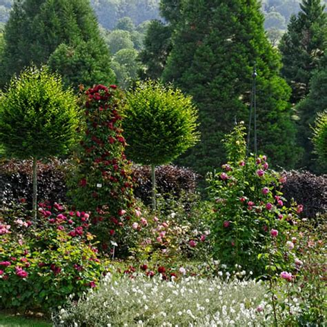 Englischer Garten Ettenbühl by Rosenversuchsgarten Landhaus Ettenb 252 Hl