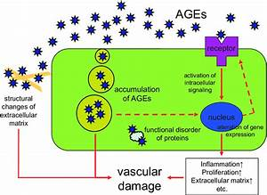 Role Of Ages In The Vascular Damage