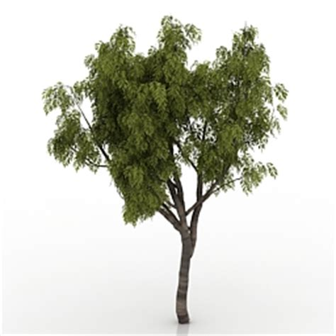 Land Of Sofas by 3d Quot Trees Rowan Quot Trees Collection Tree Rowan 3 3d