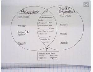 Photosynthesis And Respiration Venn Diagram  U2013 Mrs