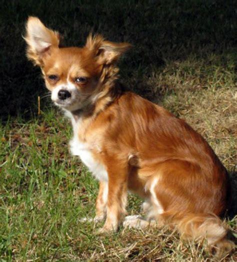 dogs     fox pethelpful