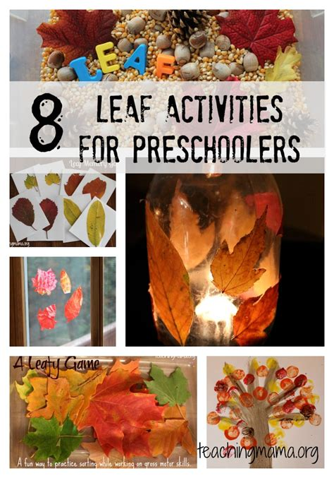 8 leaf activities for preschoolers teaching 929 | LeafCollage