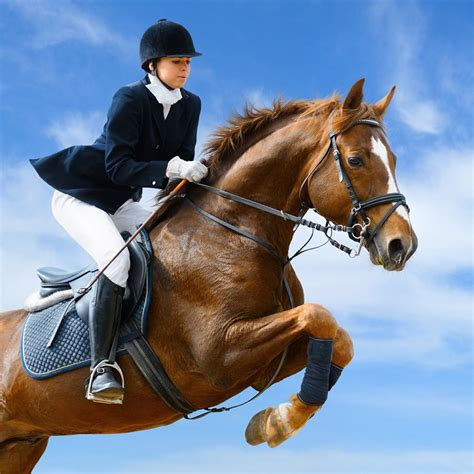 horse kimberwick bit bits pelham pros types