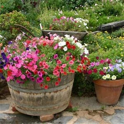 Absolutely Bushed Texastough Container Gardens