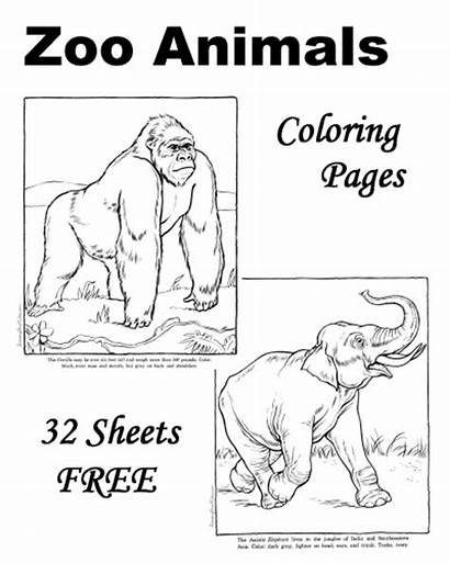 Zoo Coloring Animal Pages Printables Sheets Animals
