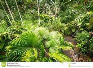 Palmier De Jardin : jardin de palmier photo stock image du plantation vert ~ Nature-et-papiers.com Idées de Décoration