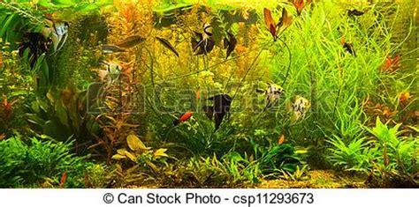 image de ttropical eau douce aquarium poissons a vert beau csp11293673 recherchez