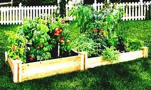 Patio Vegetable Garden Backyard Vegetable Garden