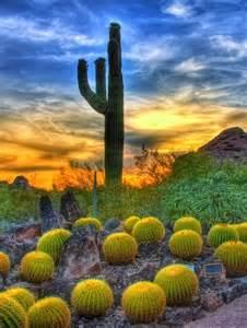 Arizona Sonoran Desert Cactus